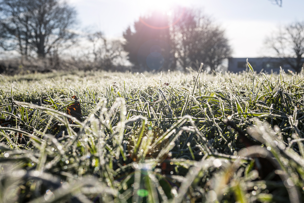 Macro detail of frost covered grass stems on a frosty day